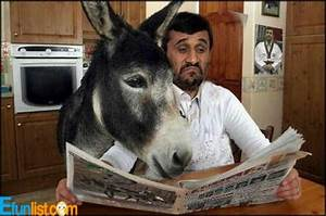 funny donkey pictures with captions   Funny-Donkey   funny ...