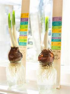 Learning Activity Bulb Growth Chart