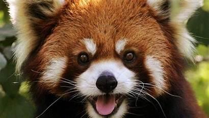 Panda Too Things