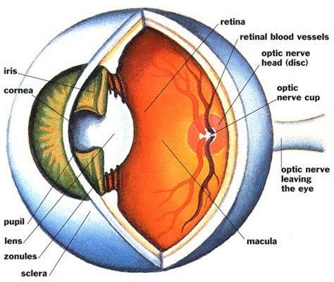 what causes blindness home remedies for blindness improvement in