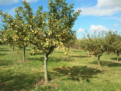 chambre d agriculture 10 dans les pommes sans se paumer sang d ase camina
