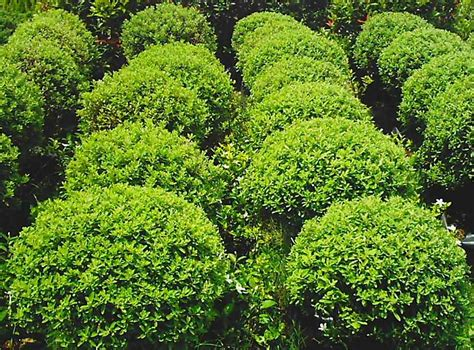 philippines landscape plants garden plants in the philippines pdf