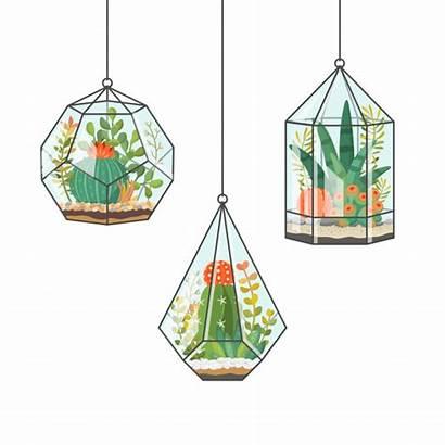 Cactus Hanging Plants Plantas Tropical Terrariums Terrarium