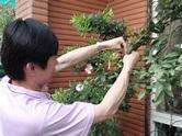 玫瑰拱門改造@自然好好玩好好玩自然|PChome 個人新聞台