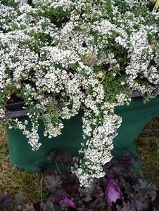 Couvre Sol Vivace : plante couvre sol page 12 paris c t jardin ~ Premium-room.com Idées de Décoration