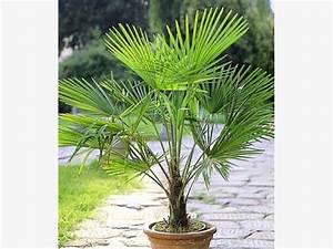 Palmen Für Drinnen : giftige und ungiftige pflanzen f r katzen mein sch ner ~ Michelbontemps.com Haus und Dekorationen