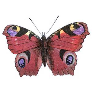 Butterfly Clip Art Free Download