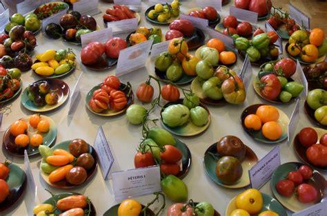 Forma, garša, izmērs: radītas jaunas un neparastas tomātu ...