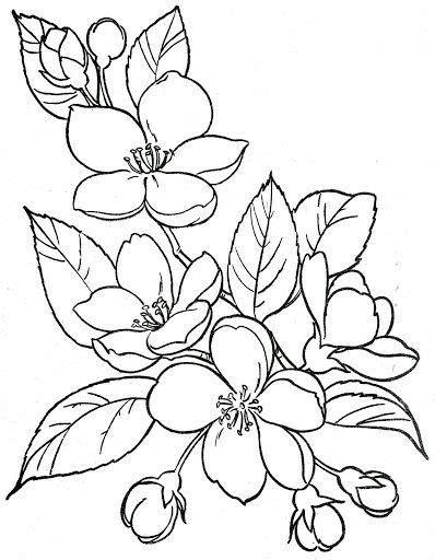 Pin by Mary Lou Mack on Çiçekli Desenler   Flower drawing