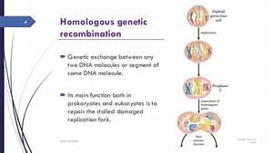 Genetic recombination mechanism