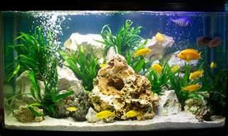 designer aquarien malawi cichlid aquarium coldwater aquarium chris aylen