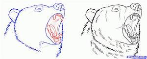 How to Draw Grizzly Bears, Step by Step, forest animals ...