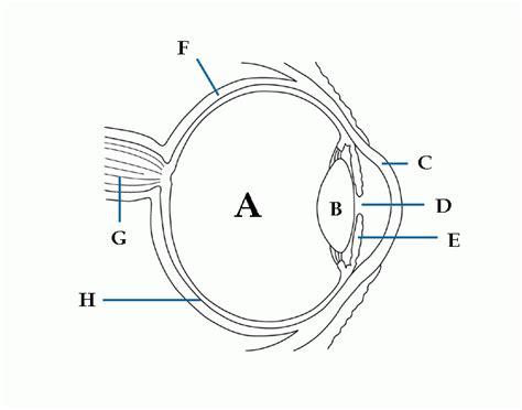 unlabeled eye diagram free clip carwad net