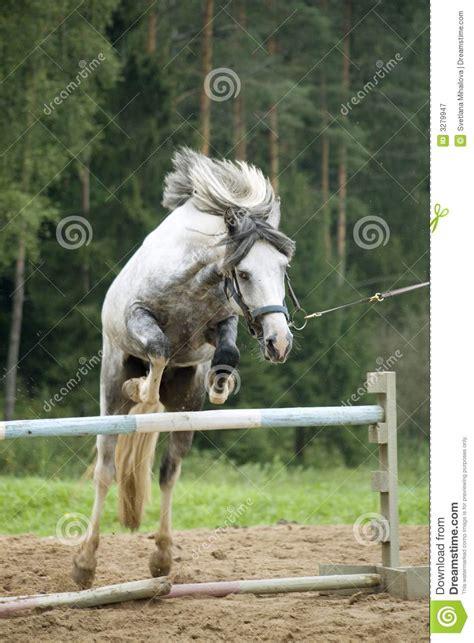 pony jumping royalty hurdle jumps dreamstime