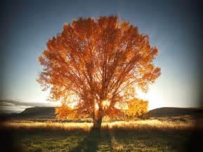 autumn tree beautiful light nature photography image 80987 on favim