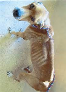 Abuse Animal Cruelty Dogs