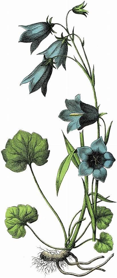 Flowers Graphics Botanical Fairy Lovely Flower Clipart