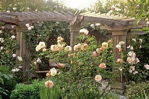 Rosa Apricot Nectar Photos, Design, Ideas, Remodel, and
