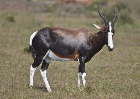pack cuisine bontebok safari lodge accommodation gondwana