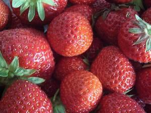 Erdbeeren Pflanzen Die Wichtigsten Tipps : erdbeeren pflanzen tipps f r balkon und garten ~ Lizthompson.info Haus und Dekorationen