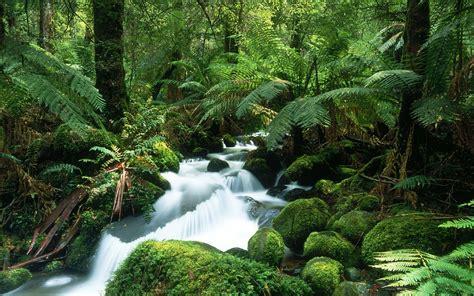 Rainforest Animals Wallpaper - tropical rainforest animals and plants new high