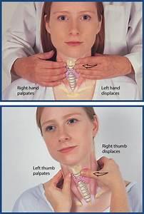 Nurse 211 Study Guide  2012-13 Daniels
