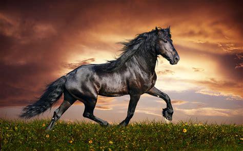 Free Hd Horse Backgrounds Desktop