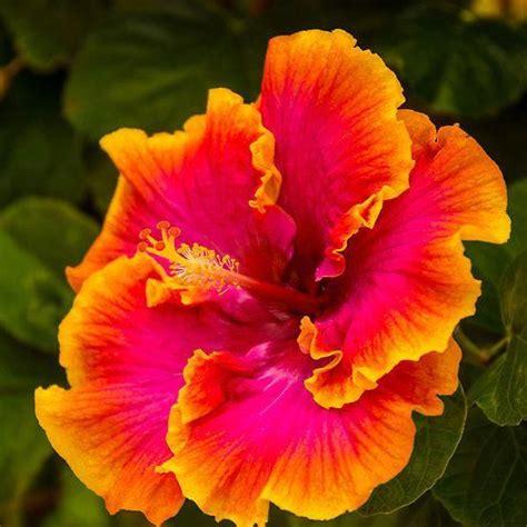 exotic flowers calgary exoticflowers exotic flowers