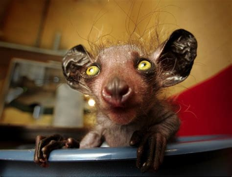 12 really ugly animals we love