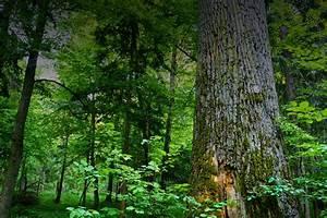 Bia U0142owie U017ca Forest