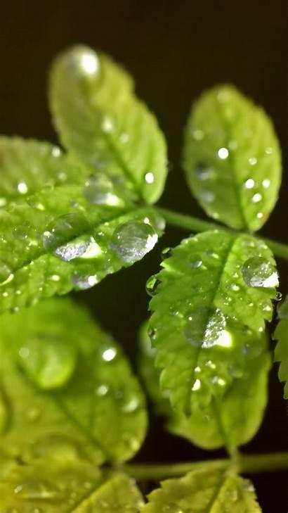 Droplets Water S4 Leaf