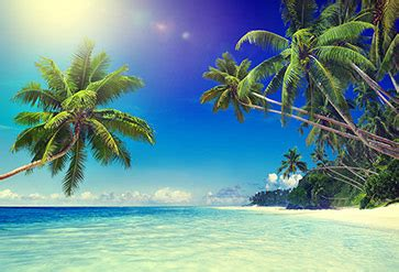 shop tropical paradise beach wallpaper  coastal
