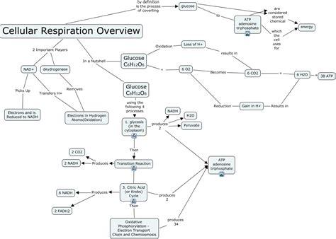 Cellular Respiration Overview