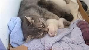 Le più belle foto dei baci di mamma gatta ai cuccioli Eco Report