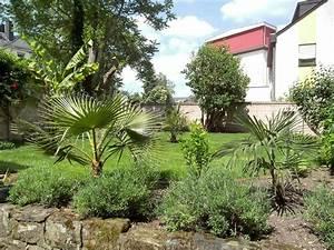 Palmen Kaufen Baumarkt : palmen und co gartenbilder aus trier ~ Orissabook.com Haus und Dekorationen