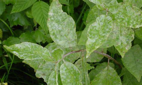 VAAD: Līdz ar siltāku laiku pieaugusi augiem kaitīgo ...