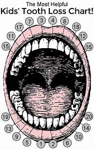 The Most Helpful Kids U0026 39  Tooth Loss Chart