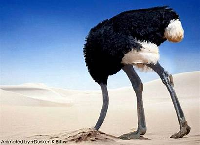 Head Ostrich Giphy Animated Sand Screw Exam