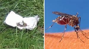 Mittel Gegen Bienen : mit diesem selbstgemachten mittel vertreibt ihr m cken und andere insekten ~ Frokenaadalensverden.com Haus und Dekorationen