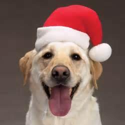 dog santa hat at baxterboo
