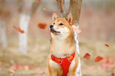 Dogecoin (DOGE) surges over 100% as Bitcoin bull run takes ...