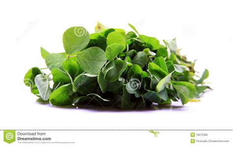 Fennel Leaves Search Results Dunia Photo