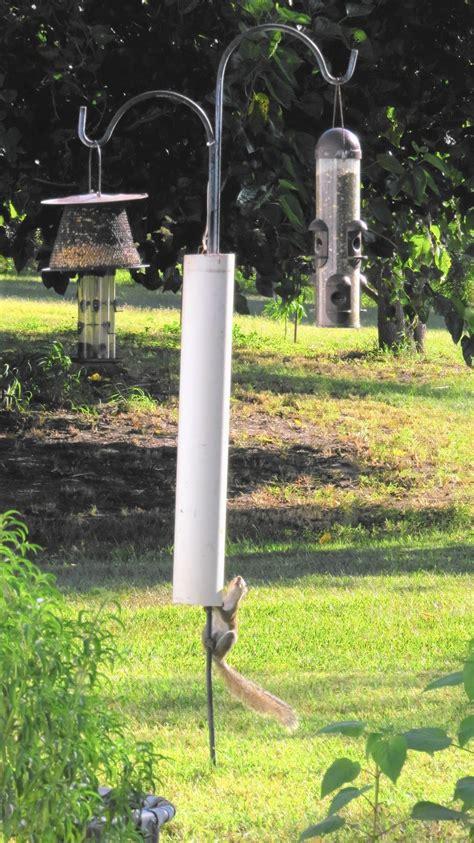 sherry boas homemade baffle repels squirrels orlando