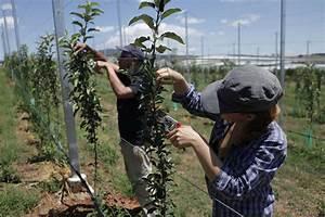 Apfelbaum Schneiden Wann : apfelbaum schneiden anleitung vom experten plantura ~ Watch28wear.com Haus und Dekorationen