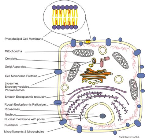 Medical Physiologycellular Physiologycell Structure And Function  Wikibooks, Open Books For