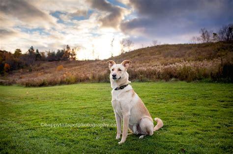 colourful  candid dog photography  burlington