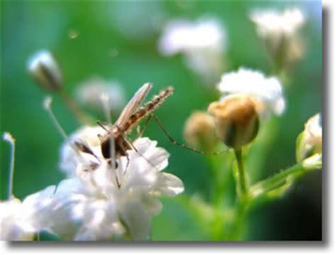 biologie france moustiques