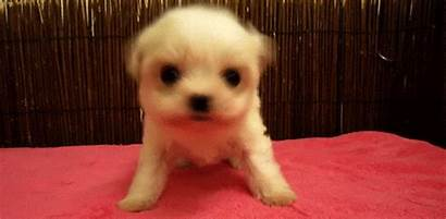Gifs Puppy Cutest Ever Head Absolutely