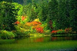Cool Nature Wallpaper: Mixture of colors