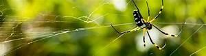 Hausmittel Gegen Spinnen : spinnen einfach entfernen kammerj ger ratgeber ~ Whattoseeinmadrid.com Haus und Dekorationen